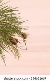 Pine tree branch with tiny pinecones close up