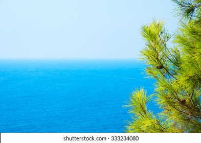 Pine tree branches with turquoise sea background, mediterranean nature