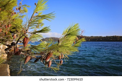 Pine tree branches with turquoise sea background
