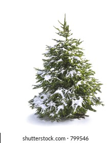 pine tree covered in snow (isolated)