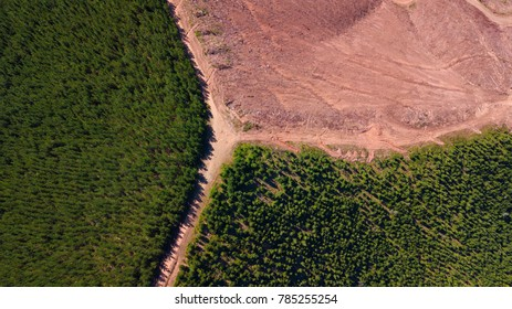Pine tree forest, aerial view