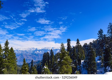 Pine tree forest after snowfall during winter trek in Dalhousie town of Himachal Pradesh India