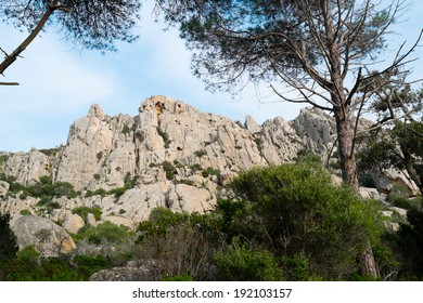 Pine tree forest in Caprera island, Sardinia, Italy