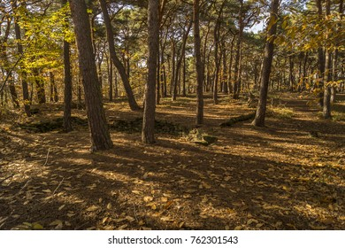 pine tree forest during fall