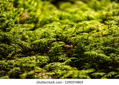pine tree forest ground covered in moss. summer green