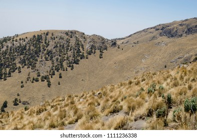 Pine tree forest on the rocky slopes of mountain during dry season