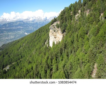 Pine tree forest on a steep slope in the Swiss Alps on a blue Summer day
