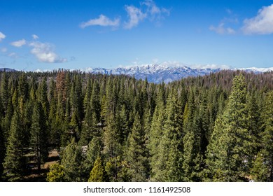 Pine tree forest stretches into the distance with snow-covered mountains beyond.