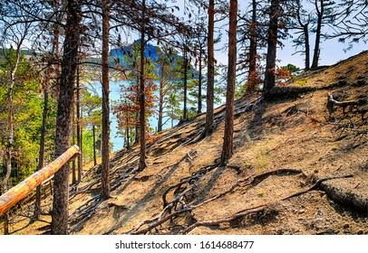 Pine tree forest summit scene. Forest trees summit. Forest summit scene. Summit in forest