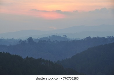 Pine tree forest at sunrise in Dalat, Central Highlands, Vietnam.