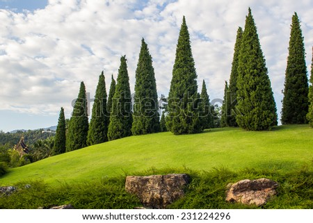 Pine Tree Garden With Decoration Cutting