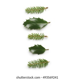 Pine tree and Holly berry leaves isolated on white background.
