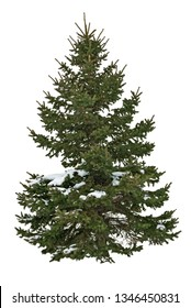 Pine tree isolated on white background. Snow covered fir tree in winter