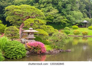 The Pine tree in Kiyosumi Garden in Tokyo, Japan.