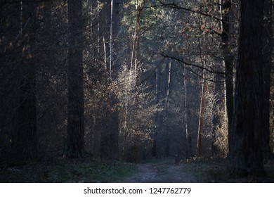 pine tree landscape nature