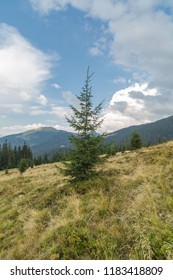 Pine tree on the hill in mountains