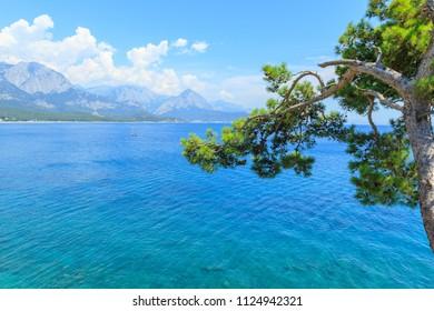 Pine tree on the Mediterranean Sea in Kemer, Turkey