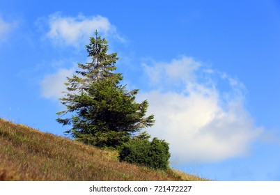 pine tree on mountain slope under blue sky