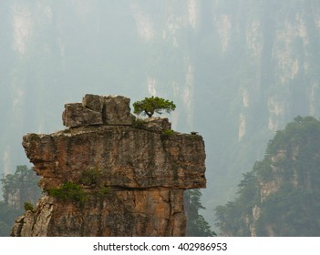 Pine tree on the top of the cliff.  China