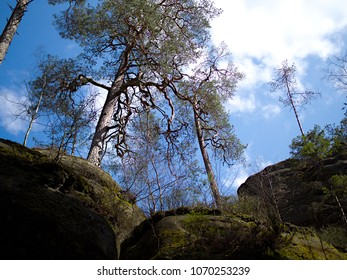 Pine Tree on the Top of the Sandstones Rocks in the Resort of the Adršpach-Teplice Mountain, Czech Republic near Boarder with Poland, Blue Sky