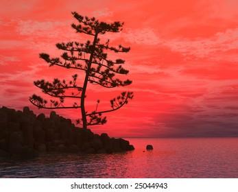 Pine tree at sea coast