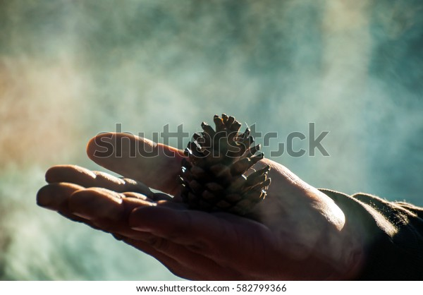 Pine Tree Seed on Hand with Fog