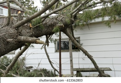 Pine tree snapped off and damages a house from Tornado storm and high wins