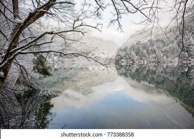 pine tree with snow at mirror lake, jiuzhaigou
