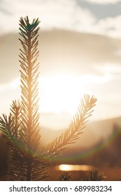 Pine Tree Sprout against the sun shot