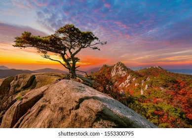 a pine tree standing alon at dobong mountian. in early winter at bukhansan nation park south korea