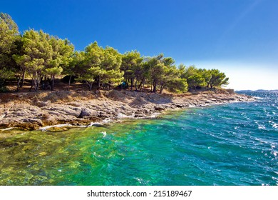 Pine tree and stone beach with crystal clear turquoise sea in Island of Murter, Croatia