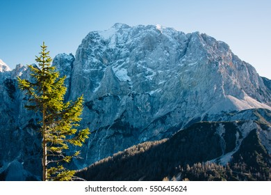 A pine tree surrounded by mountain peeks in winter