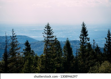 Pine Tree tops with mountain valley in the background