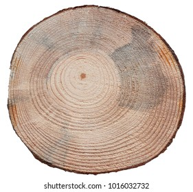 Pine tree trunk cross cut wood texture isolated on white