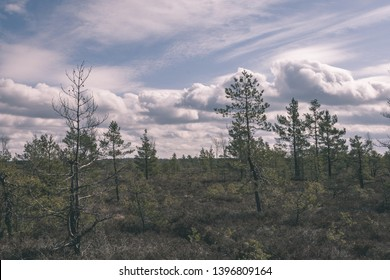 pine tree trunks and branches with green needles in swamp area. bright colors and blur background - vintage retro film look