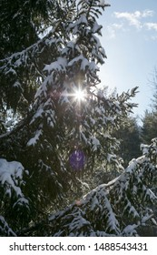 Pine Tree in Winter with sun burst