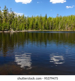 Pine trees along the shoreline of Scaup Lake in Yellowstone National Park