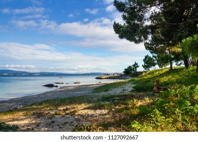 Pine trees and beach on Furado Point in Arousa Island