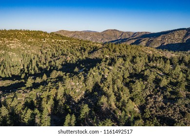 Pine trees cover the rolling hills in the mountains of California above Los Angeles.