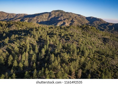 Pine trees cover the slopes of mountains in southern California above the city of Los Angeles.