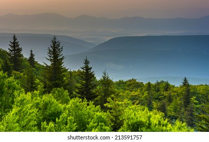 Pine trees and distant mountains, seen from Bear Rocks Preserve, Monongahela National Forest, West Virginia.