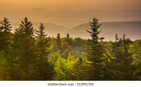 Pine trees and distant mountains at sunrise, seen from Bear Rocks Preserve, Monongahela National Forest, West Virginia.