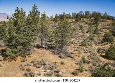 Pine trees dot a hillside slope in the San Gabriel Mountains of southern California.