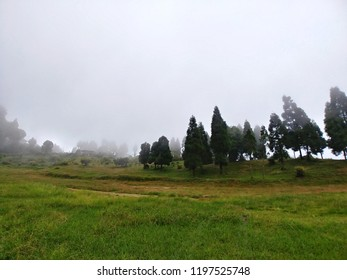 Pine trees at a green mountain valley of kalimpong,India in a foggy afternoon.