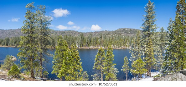 Pine trees grow along the shore of a blue lake in the Sierra Nevada mountains of central California.
