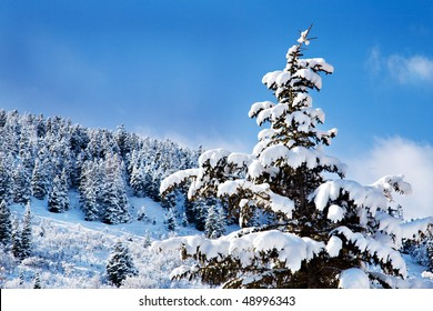 Pine trees are heavy with snow, and the new-fallen snow sparkles in the sunlight against a brilliant blue sky and fluffy white clouds.