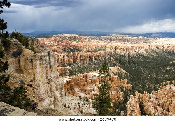 pine trees  and hodoos of Fairyland Point at Bryce National Park, Utah, USA