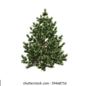 Pine trees isolated on white