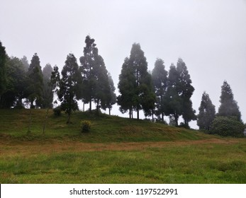 Pine trees in a mountain valley of kalimpong, India.