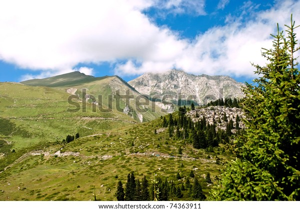 Pine trees in the mountains of Wyoming